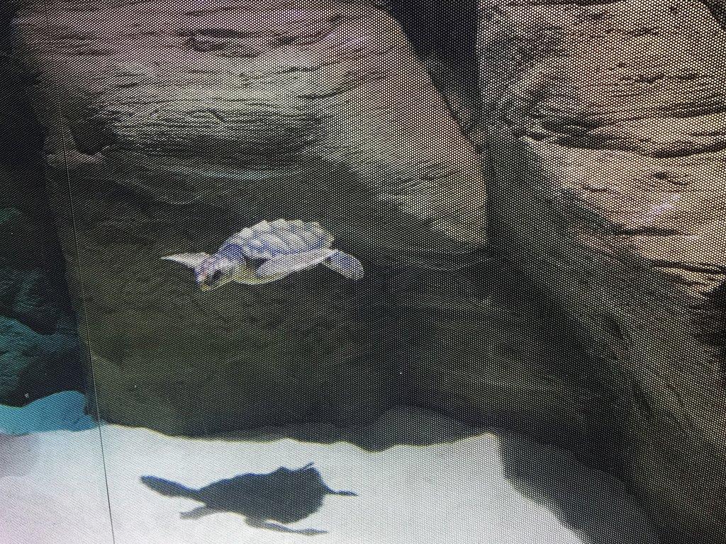 JC Loggerhead turtle now on display at Exploris Aquarium