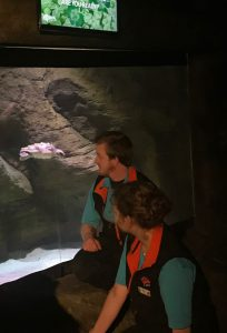 JC the turtle with Aquarists Peter Williams and Maria Carbin