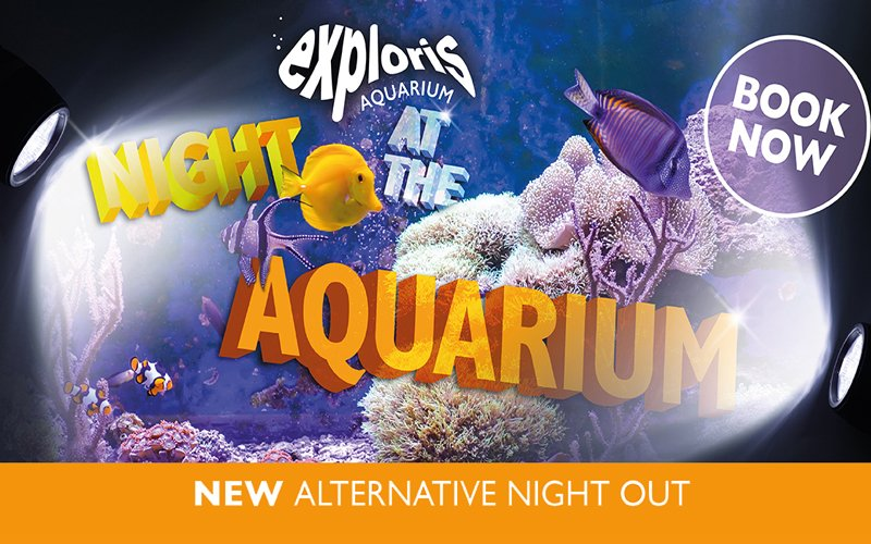 Night At The Aquarium