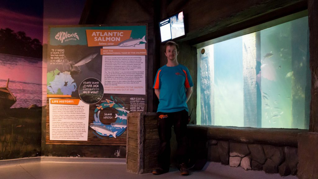 Aquarist Pete with new Salmon display at Exploris Aquarium