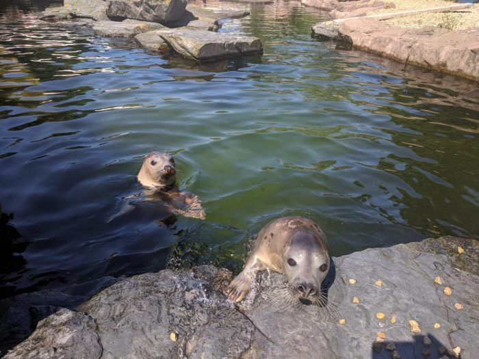 Amphitrite and Doris seal release